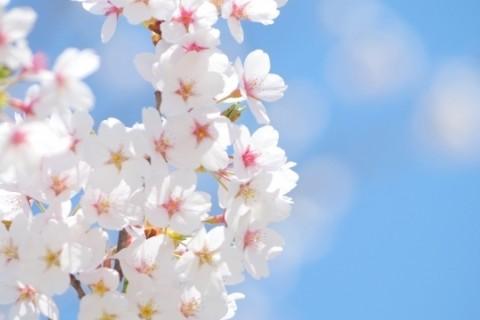 [Trail Walk・神奈川]お花見トレイルウォーク 弘法山-高取山