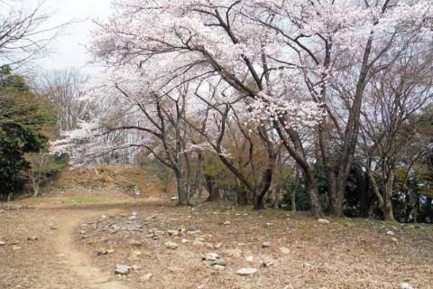 ≪ランde観光≫[滋賀]桜舞う!戦国の山城から北国脇往還へ【レベル4】 観光・トレラン