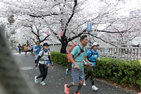 3/28(日) 東京都電荒川線お花見マラニック20Km