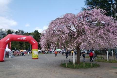 Saturday Morning Run(高水三山~青梅丘陵トレイルラン)
