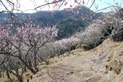 Saturday Morning Run(湯河原ロード&トレイルラン)
