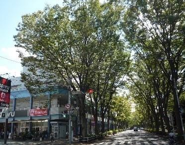 日本の道百選(さくら通り) 6/10km 自由歩行