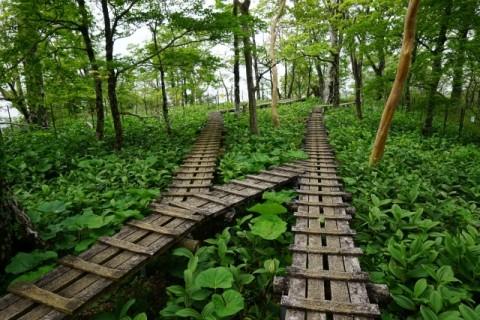 [登山・神奈川]お花見登山 檜洞丸 ツツジ新道