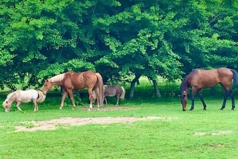 2021年夏:馬と走ろう「馬と自然リトリート」