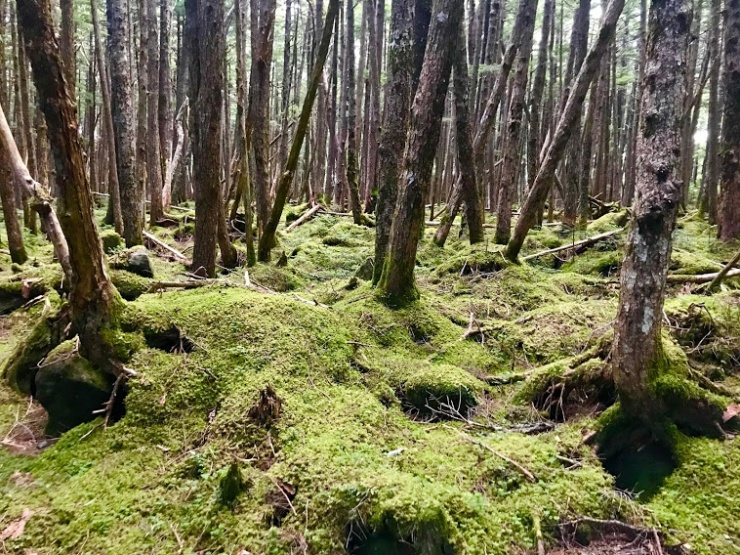 日本三大苔聖地とも言われる白駒池周辺の森