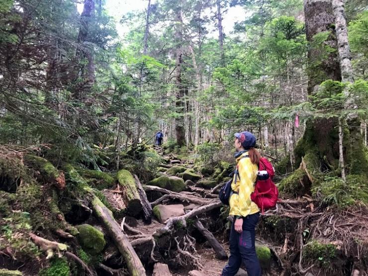 神秘的な苔の森