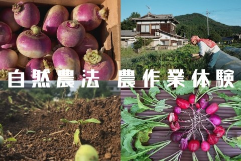 自然農法 農作業体験(10月23日PM開催/10月24日早朝開催)