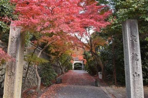 【秋の紅葉5kmウォーキング】