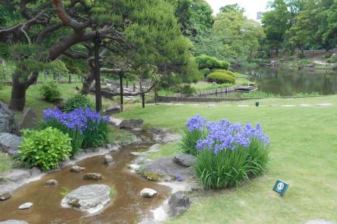 花菖蒲ランは哲学堂公園、鬼子母神、肥後細川庭園、後楽園、神田川を走る21km&10km他